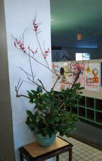 五戸町図書館正月花 ビフォー&アフター_c0165824_18211946.jpg