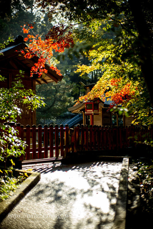 京都の秋2019(42)_d0108132_11495453.jpg