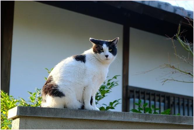 あなたは猫ですか?牛ですか?_f0166234_00554912.jpg