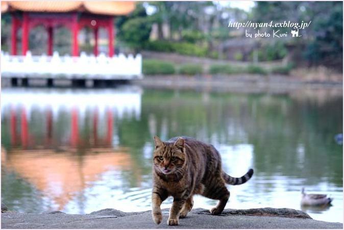 あなたは猫ですか?牛ですか?_f0166234_01082706.jpg