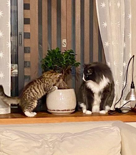 我が家の猫 スハとユール_b0325640_22325779.jpg