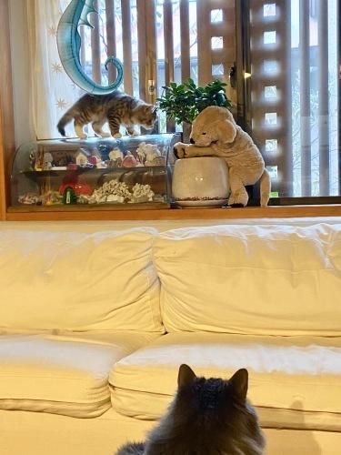 我が家の猫 スハとユール_b0325640_22333175.jpg