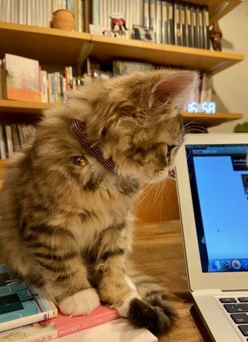 我が家の猫 スハとユール_b0325640_22340696.jpg
