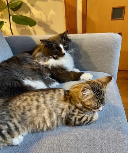 我が家の猫 スハとユール_b0325640_22344362.jpg