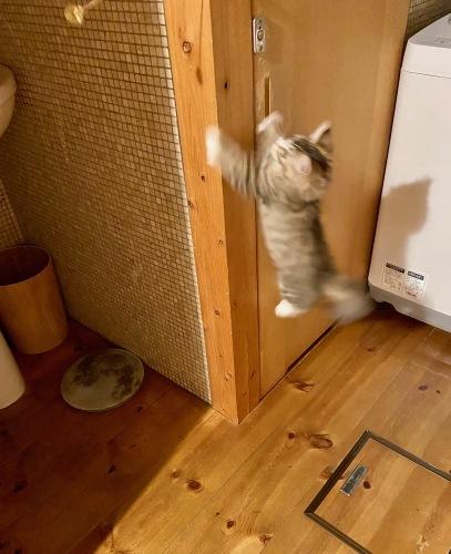 我が家の猫 スハとユール_b0325640_23080515.jpg
