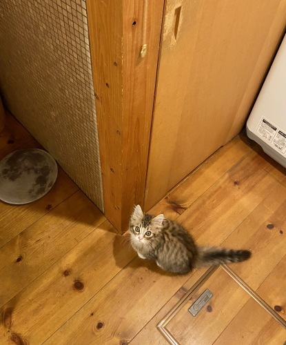 我が家の猫 スハとユール_b0325640_23081458.jpg