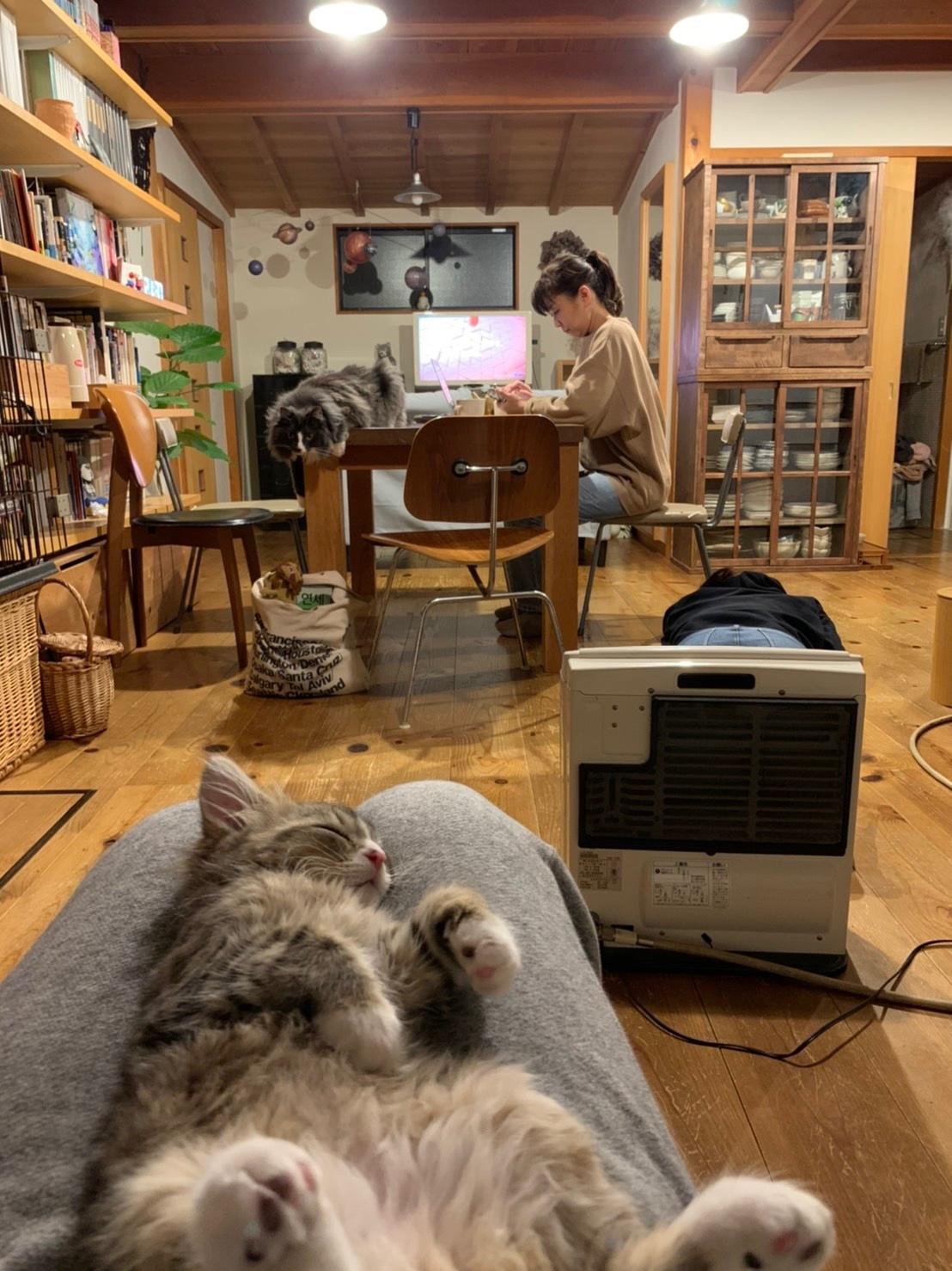 我が家の猫 スハとユール_b0325640_23214023.jpg