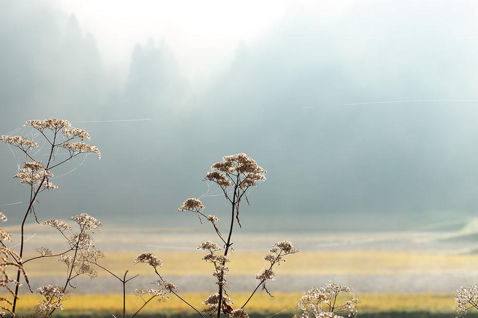 霧残る朝 3_c0067040_19381621.jpg