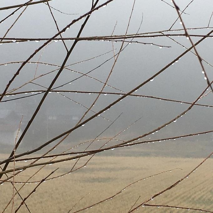 ヤナギに朝霧の露_c0353953_21485344.jpeg
