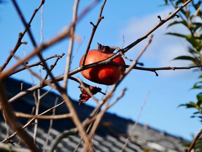 木守柿のある風景  2020-01-19 00:00  _b0093754_21204620.jpg