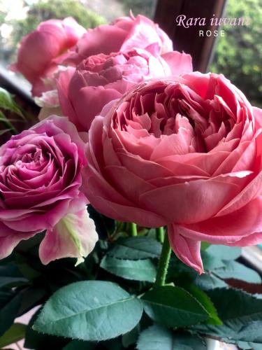 バラを頂きました (*≧▽≦)o∠※_b0345658_15010601.jpg