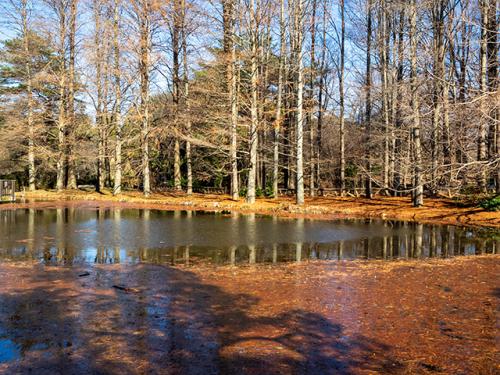 冬枯れの公園_d0251171_20004708.jpg