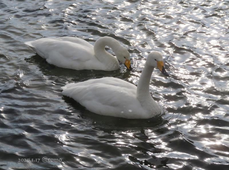 免許更新講習と鳥見_f0067179_20044730.jpg