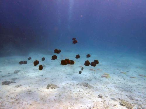ラチャヤイ島 ナイス体験ダイビング(*^_^*)_f0144385_22472551.jpg