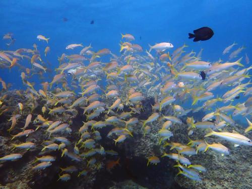 ラチャヤイ島 ナイス体験ダイビング(*^_^*)_f0144385_22472577.jpg