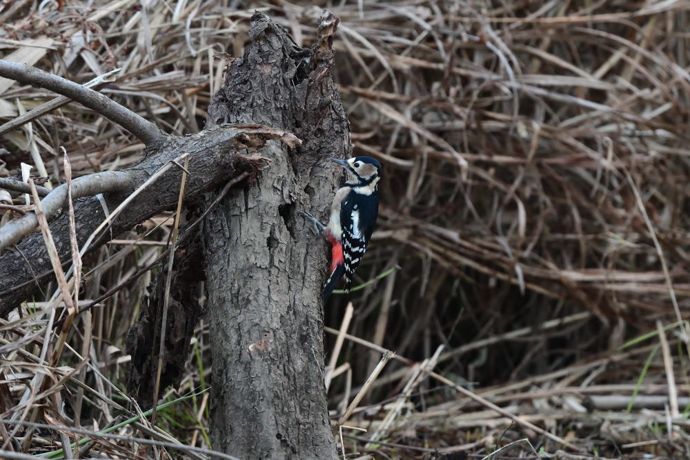 低い枯れ木に_f0202686_17394674.jpg