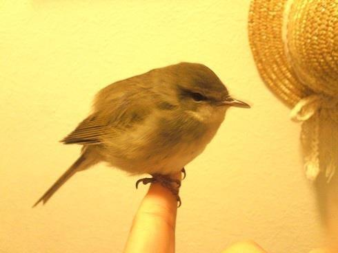 野鳥が手のひらで眠る_a0247891_21253195.jpeg