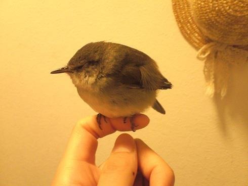 野鳥が手のひらで眠る_a0247891_21255270.jpeg