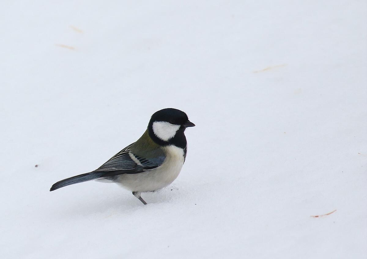 雪原を歩いて・・・_c0113597_14190501.jpg