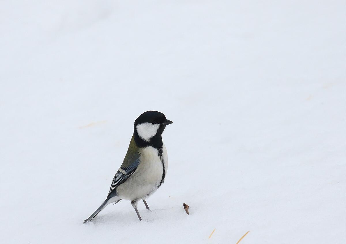 雪原を歩いて・・・_c0113597_14192087.jpg