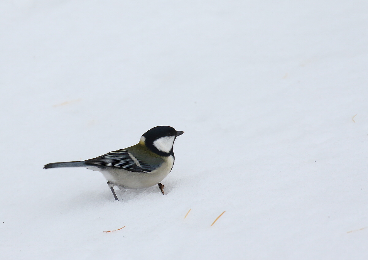 雪原を歩いて・・・_c0113597_14201633.jpg