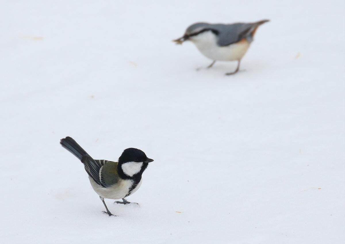 雪原を歩いて・・・_c0113597_14202989.jpg