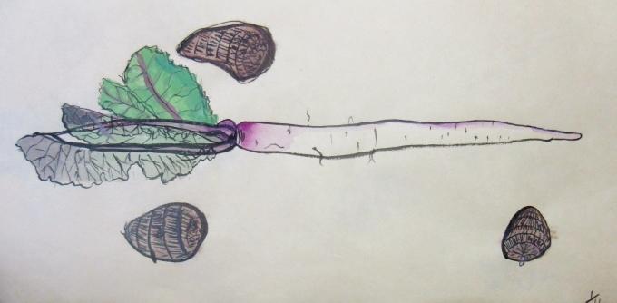 よくみて描く・冬野菜 2020 1月_f0211514_18125158.jpg