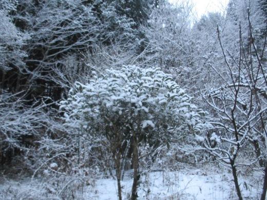 雪は降る♬     1月18日(土)_d0127634_13224363.jpg