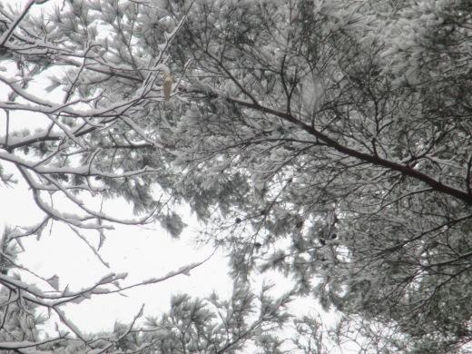 雪は降る♬     1月18日(土)_d0127634_13393559.jpg