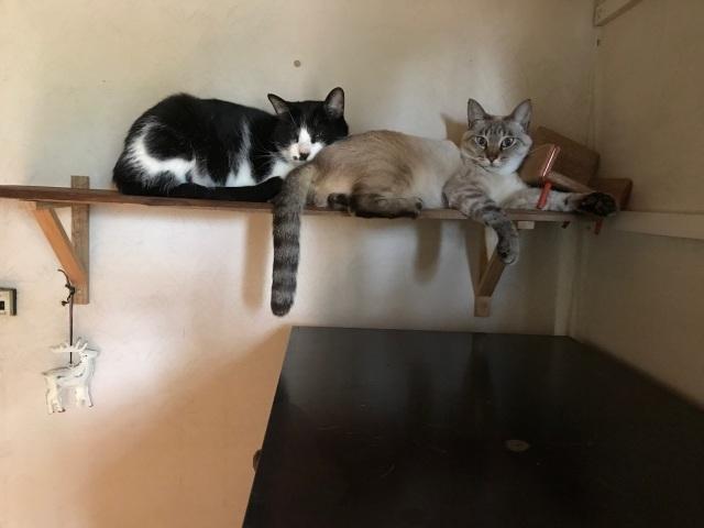 猫に占領される_d0101846_16274743.jpeg