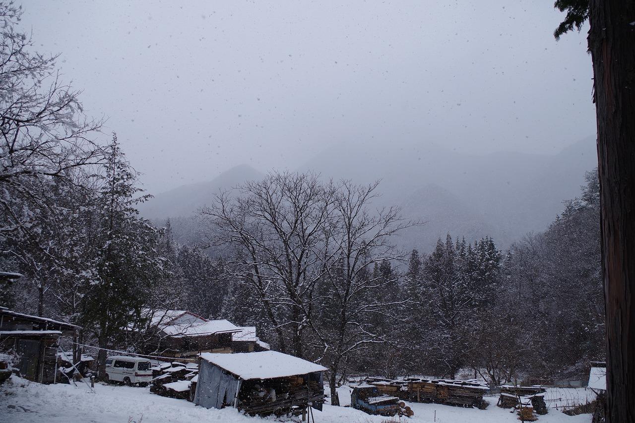 雪降りですが・・・。_f0114346_11502096.jpg