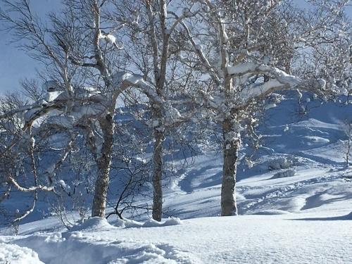 三段山でスノーシュー_e0326953_17170986.jpg