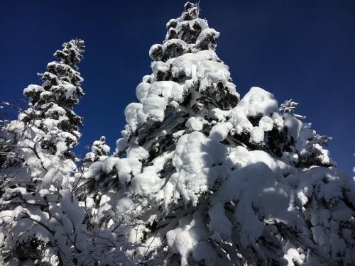 三段山でスノーシュー_e0326953_17205995.jpg