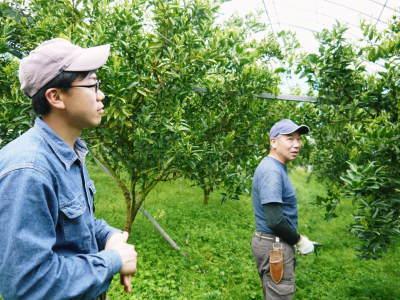 究極の柑橘「せとか」 令和2年も出荷は2月中旬より!収穫まで1ヶ月前の様子を現地取材(前編)_a0254656_18234227.jpg