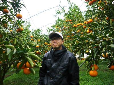 究極の柑橘「せとか」 令和2年も出荷は2月中旬より!収穫まで1ヶ月前の様子を現地取材(前編)_a0254656_18315272.jpg