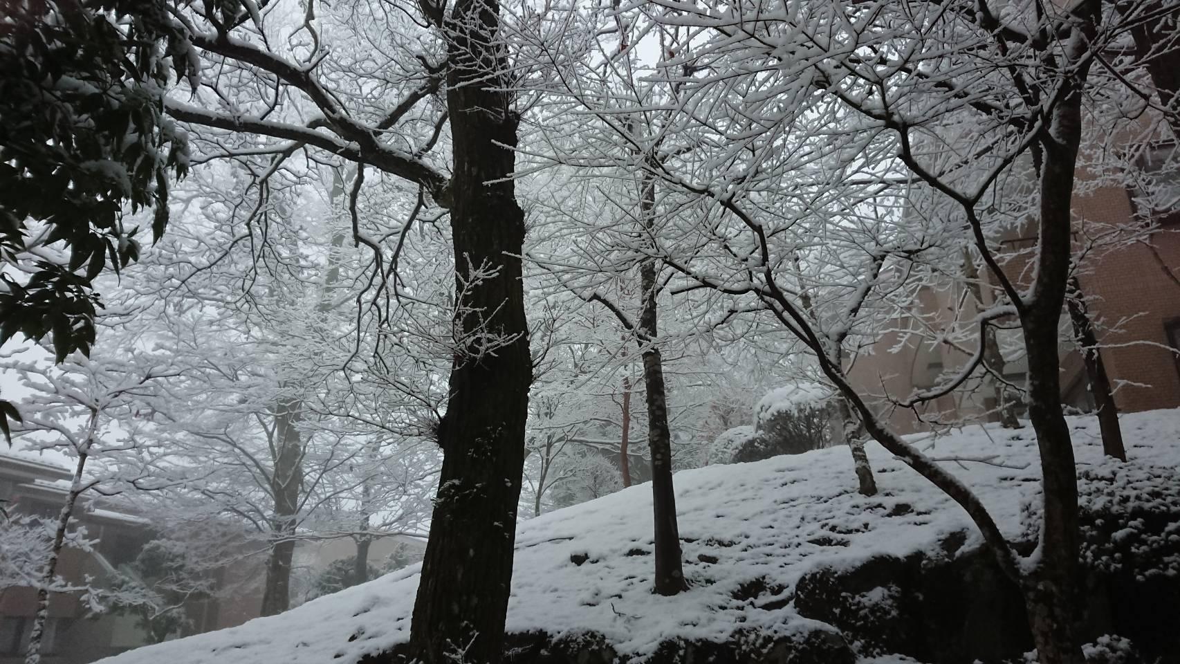 箱根は雪景色、好きです山田パンダ。_b0096957_16161973.jpg