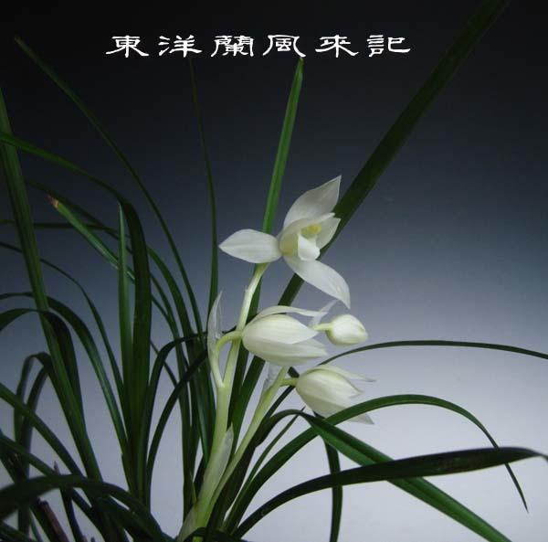 白馬雪山                          No.2003_d0103457_00153485.jpg