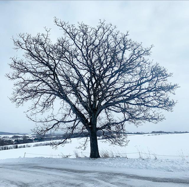 冬の美瑛町をFATバイクで走って来ました!_d0197762_18165382.jpeg