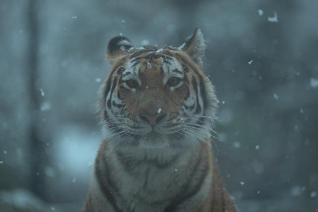 雪の動物園_a0188771_21573299.jpg