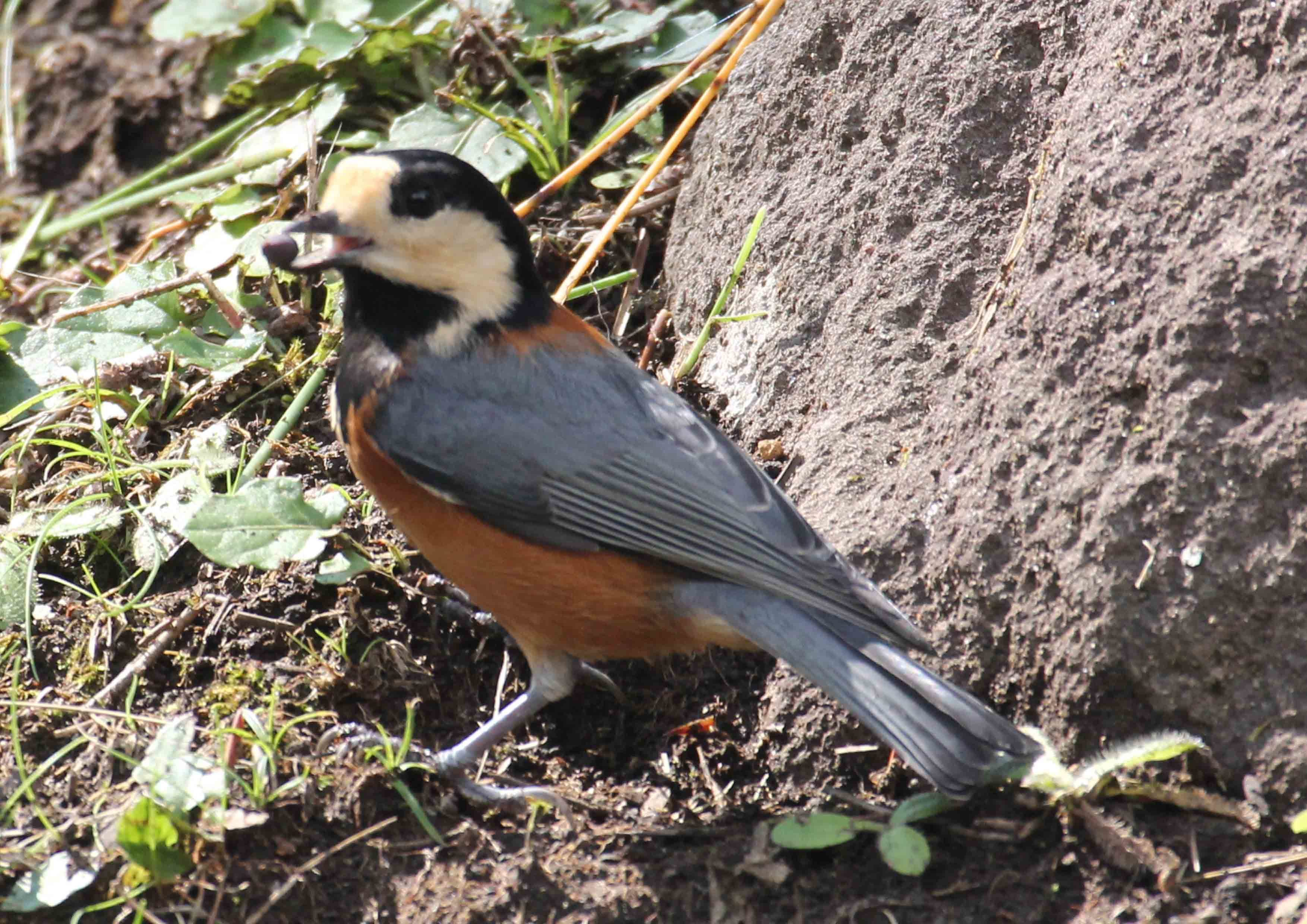 コラムリレー(第148回)「渡る鳥渡らない鳥」_f0228071_13273902.jpg