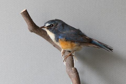 コラムリレー(第148回)「渡る鳥渡らない鳥」_f0228071_13313046.jpg