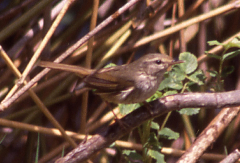 コラムリレー(第148回)「渡る鳥渡らない鳥」_f0228071_15371483.jpg