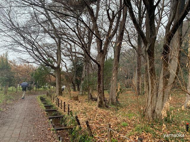 武蔵野に雪は降り、地震対策はしていない。。。_f0071480_19230795.jpg