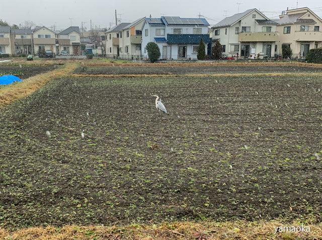 武蔵野に雪は降り、地震対策はしていない。。。_f0071480_19232463.jpg
