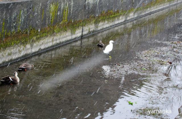武蔵野に雪は降り、地震対策はしていない。。。_f0071480_19233889.jpg