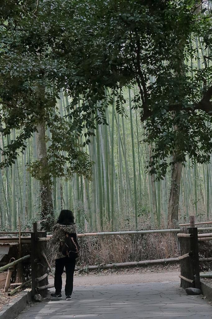 嵐山.嵯峨野5_a0170082_18351885.jpg