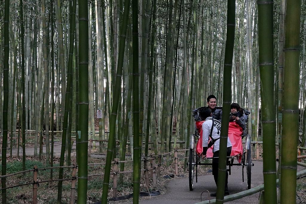 嵐山.嵯峨野5_a0170082_18352102.jpg
