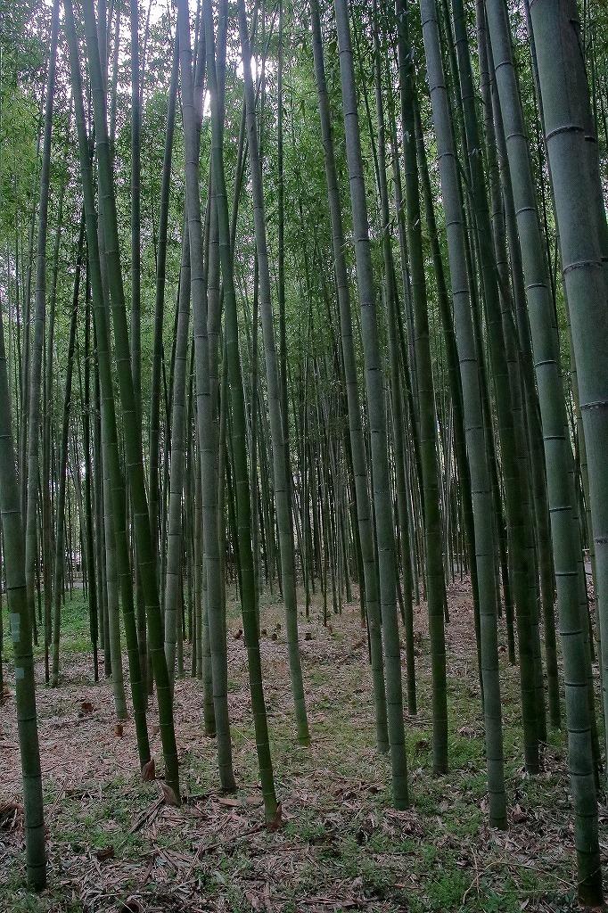 嵐山.嵯峨野5_a0170082_18352435.jpg