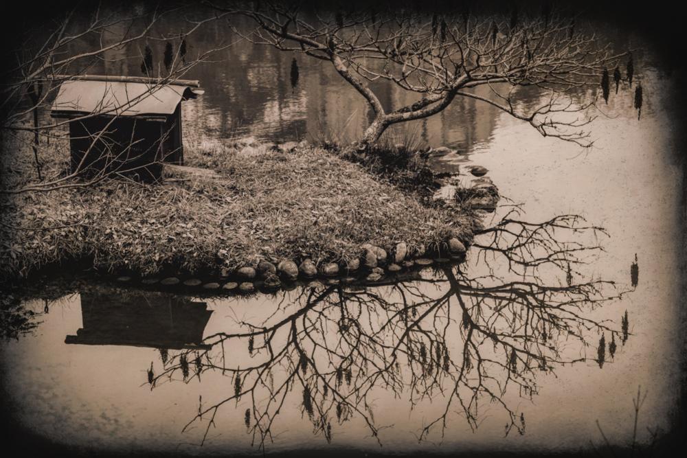 白鳥の池_b0126495_17561918.jpg