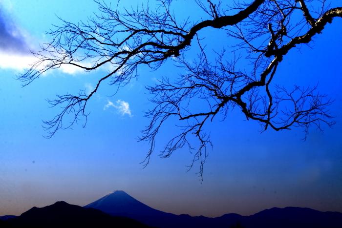 令和2年1月の富士 (12) 美し森からの富士_e0344396_11052518.jpg